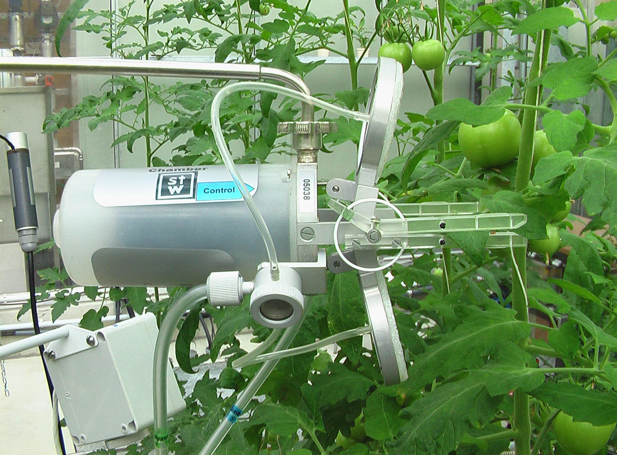 bedingungen der photosynthese